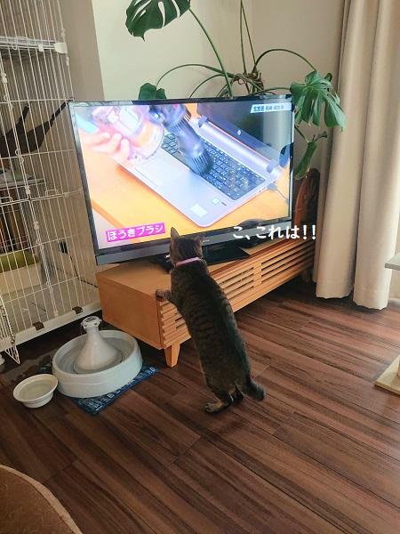 ジャパネット 猫