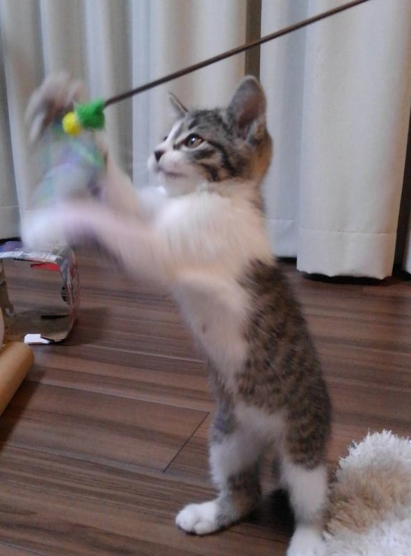 やんちゃな猫