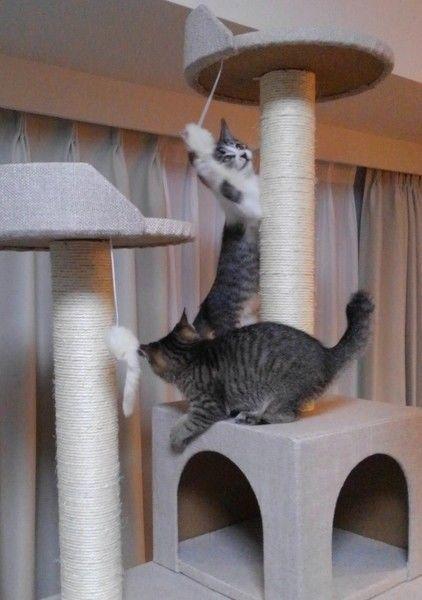 キャットタワー 遊び方