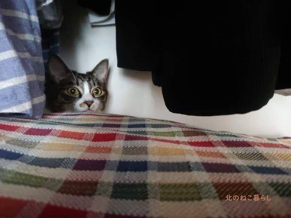 クローゼット 猫