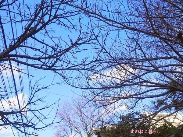 桜 ナナカマド