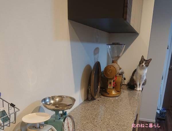 キッチンと猫