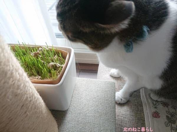 猫草 無印良品