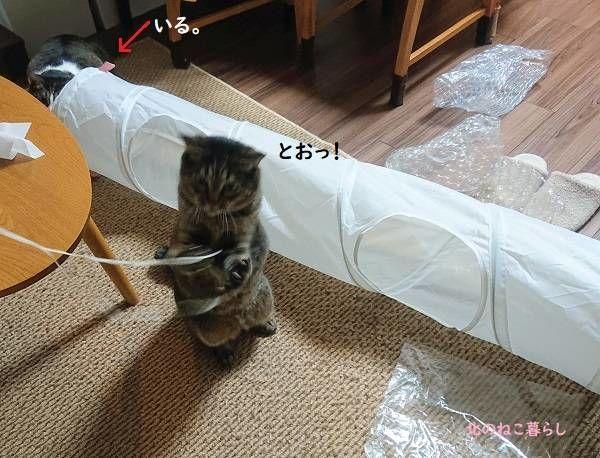 真剣白刃取り 猫