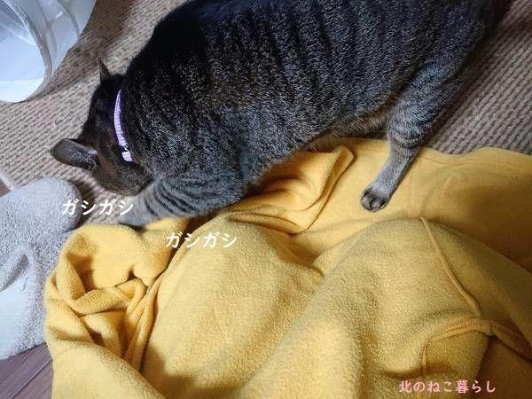フリース 猫