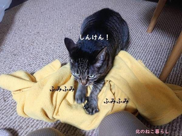 猫 ふみふみ