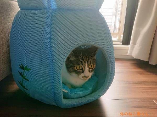 クールベッド 金魚鉢