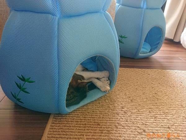 クールベッド 猫