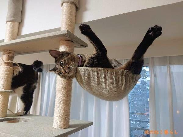 スケキヨ 猫