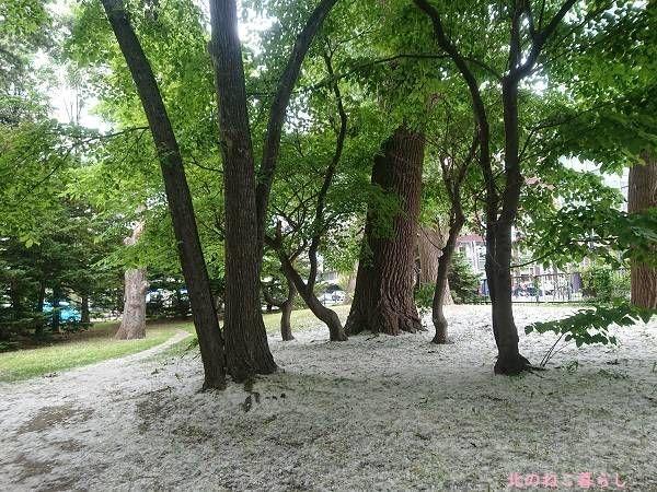 北海道庁前庭