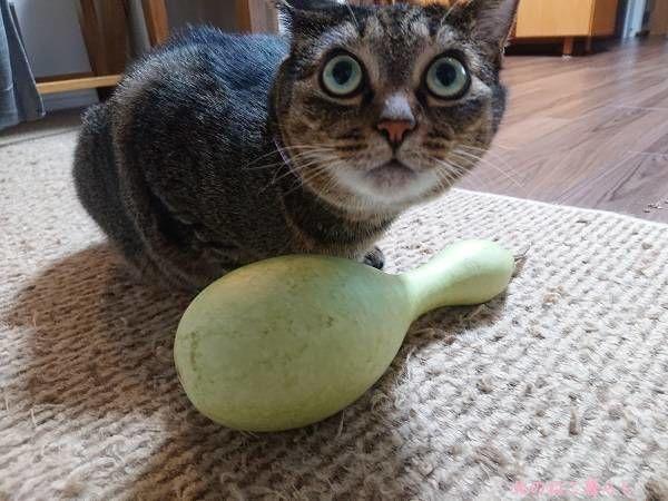 ひょうたんと猫