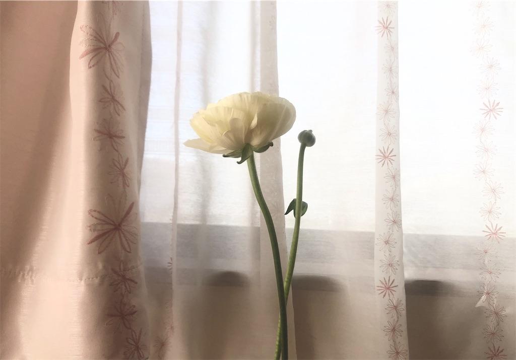 f:id:nanaken75:20200130152529j:image
