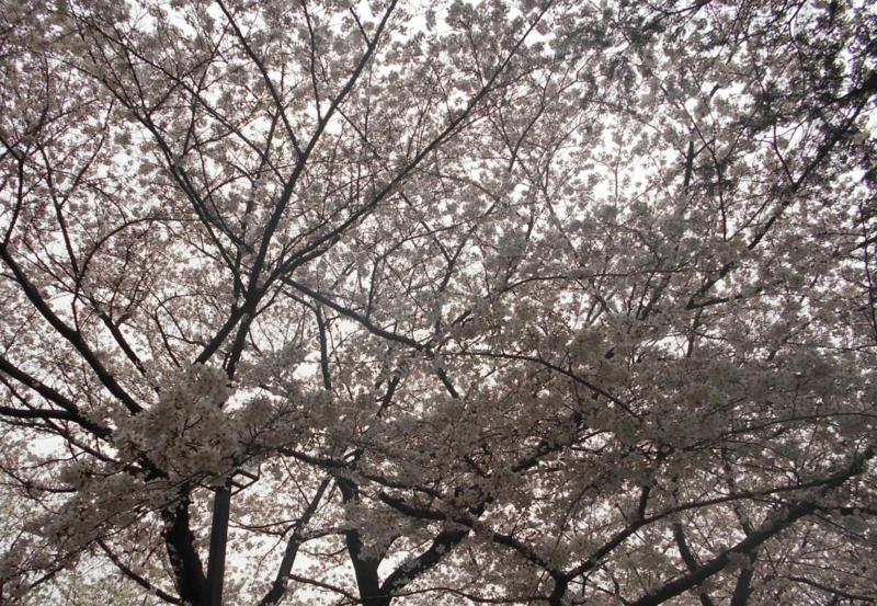 f:id:nanapapa-hiro:20160402213955j:image