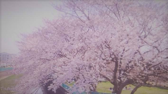 f:id:nanapapa-hiro:20170411213945j:image