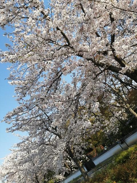 f:id:nanashi_no_hitorigatari:20200430223626j:plain