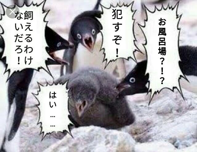 f:id:nanashinonakao:20170116013217j:plain