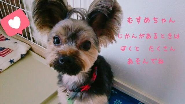 f:id:nanasuker:20200531190105j:image