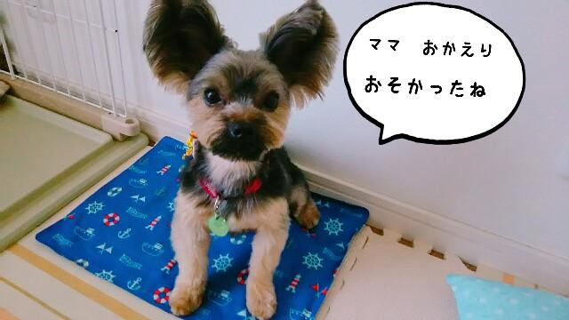 f:id:nanasuker:20200601164345j:image