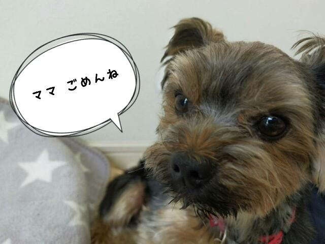 f:id:nanasuker:20200601164817j:image