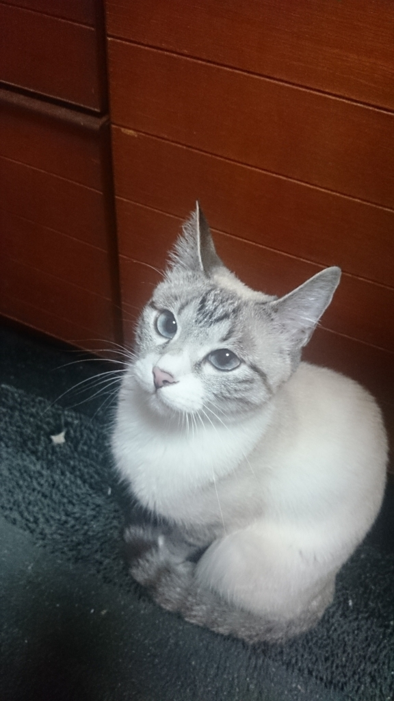 f:id:nanatohachiwa:20170127083653j:plain