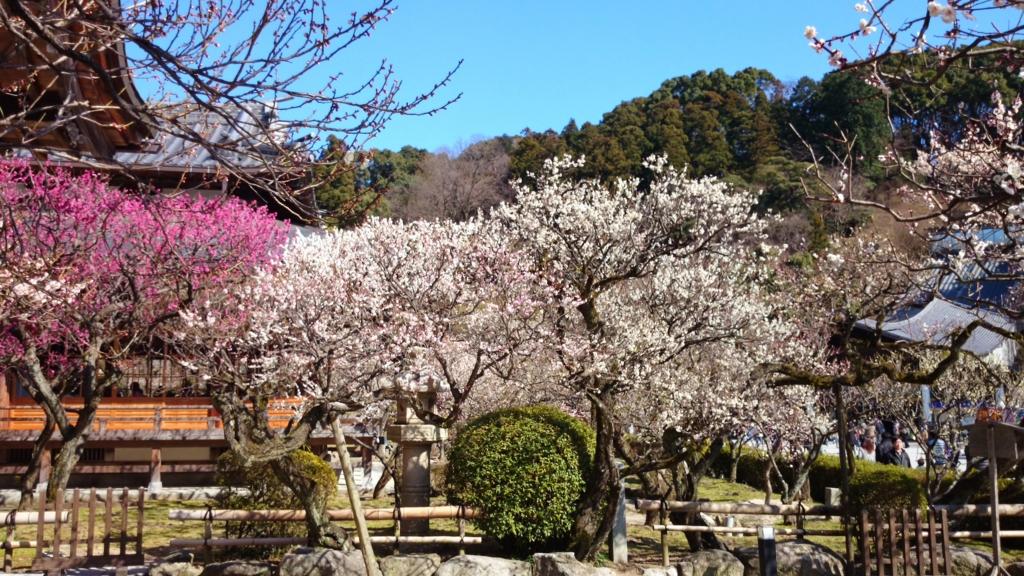 f:id:nanatohachiwa:20170201194438j:plain