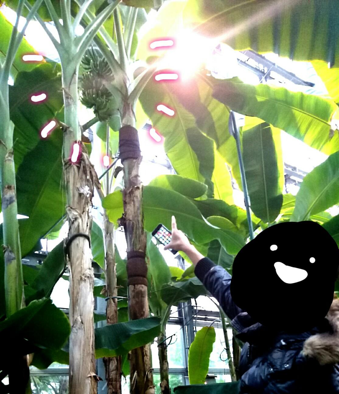 f:id:nanatuka1000:20161125164102j:image