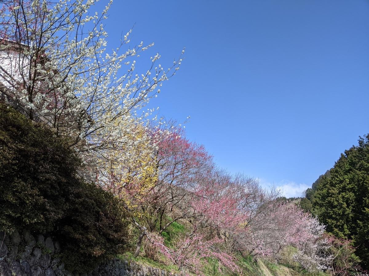 f:id:nanbo-takayama:20210315195818j:plain