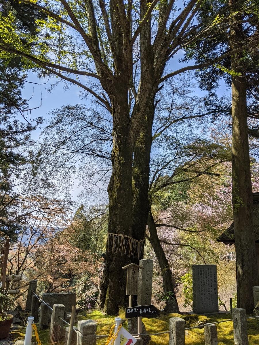 f:id:nanbo-takayama:20210505142909j:plain