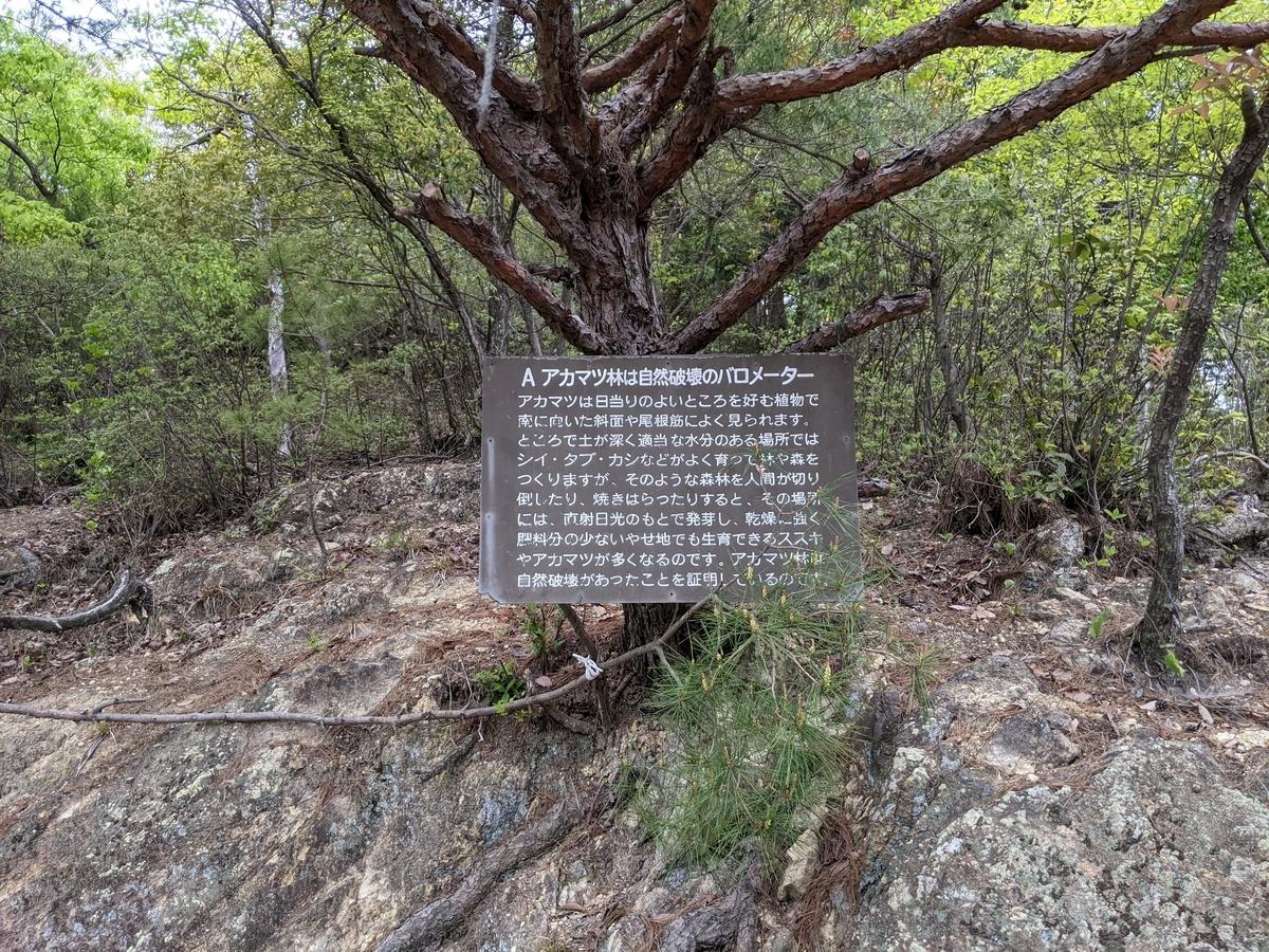 f:id:nanbo-takayama:20210618184906j:plain