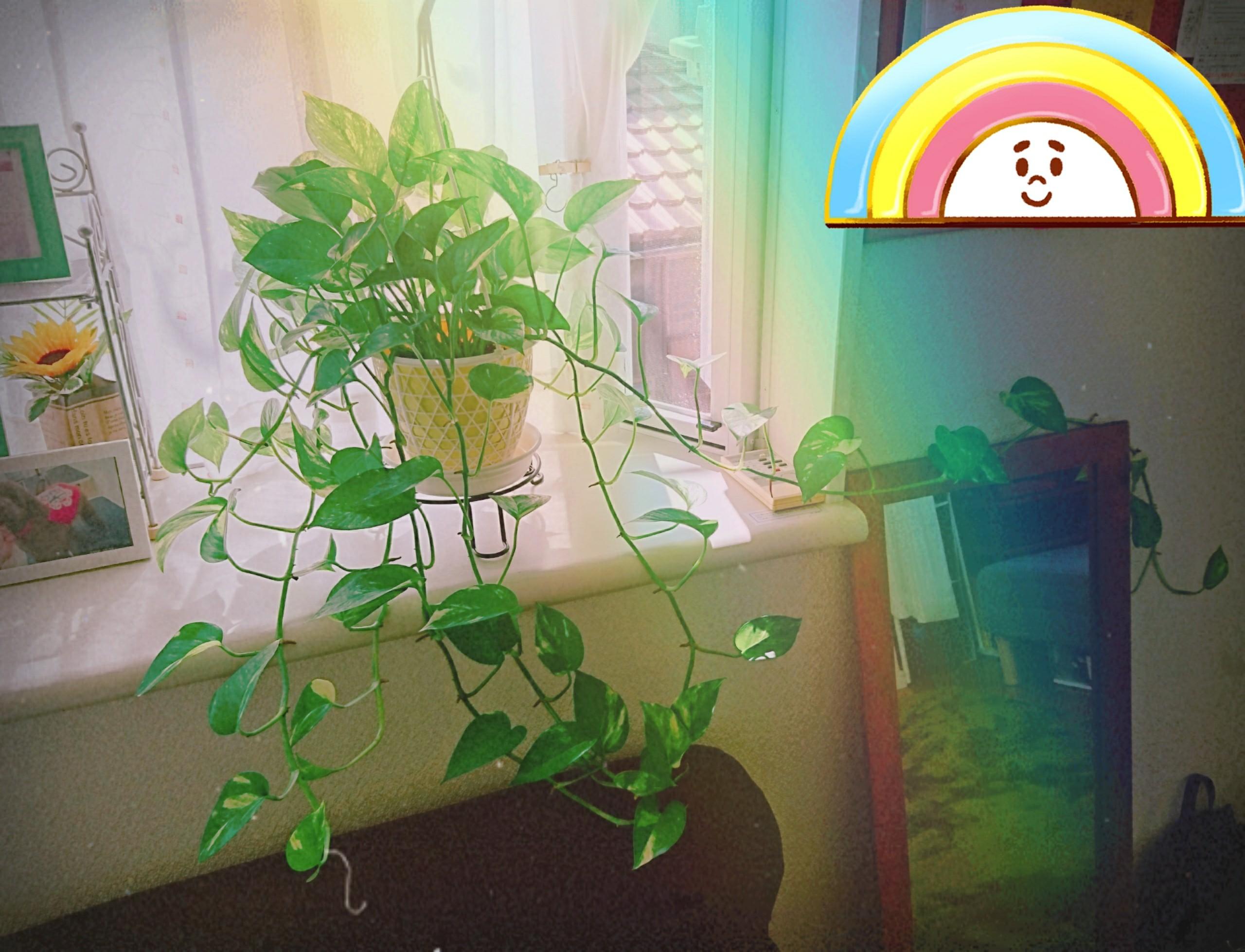 f:id:nanbyou:20171010120922j:image