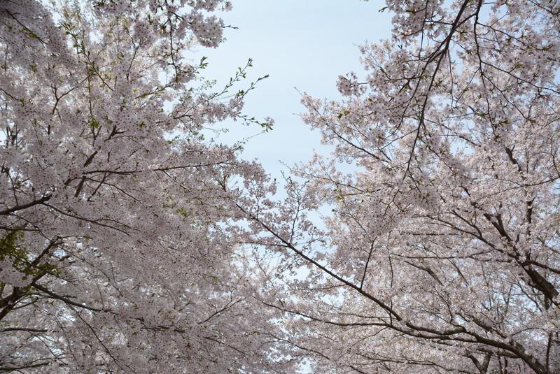 f:id:nanigashi-yakko:20190413215008j:plain