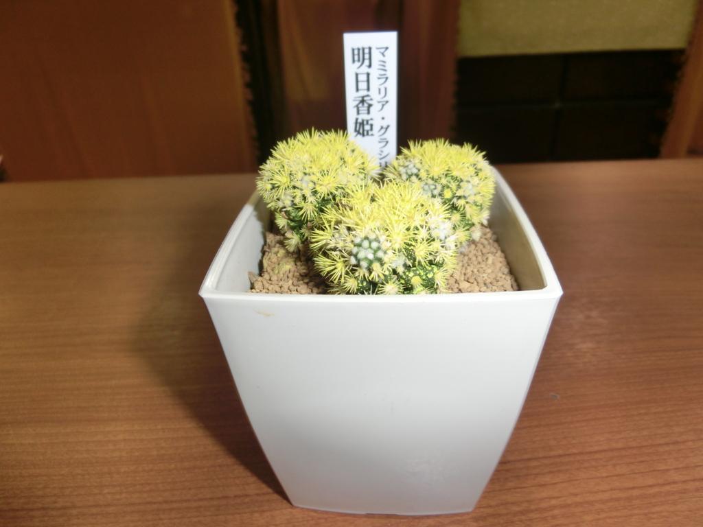 f:id:naniwa-hanamaru-chukichi:20160713215920j:plain