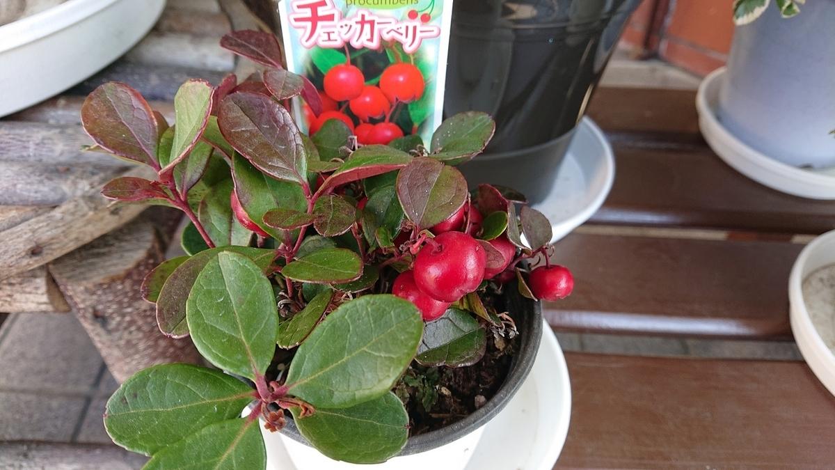 f:id:naniwa-hanamaru-chukichi:20200109181119j:plain