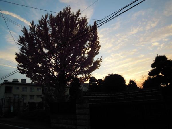 f:id:nanohana-chan:20110203184650j:image:w500