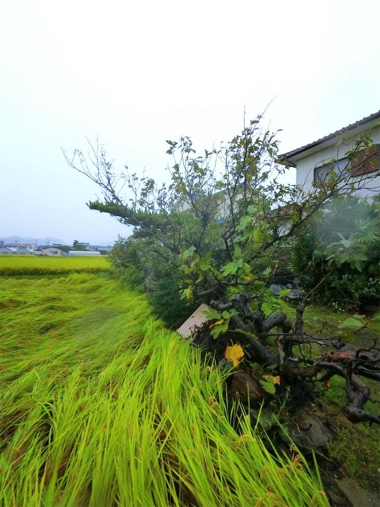 f:id:nanohana2000:20171022162733j:image