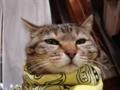 [猫][ユキ子さん]バンダナ巻いてカックいいユキ子さん。
