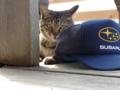 [猫][ユキ子さん][六月八日]いすの下でお休み中