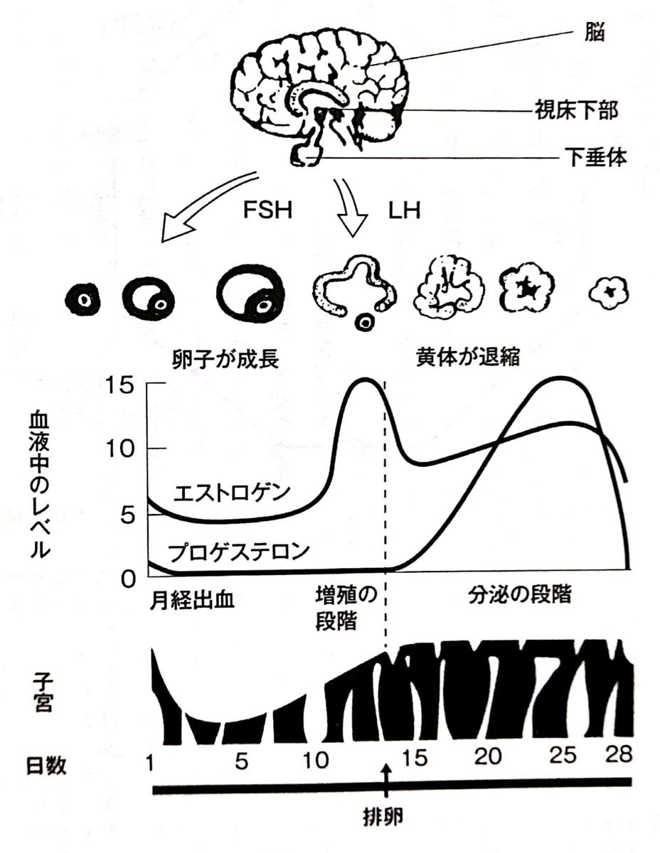 f:id:nao-chun:20200113101725j:plain