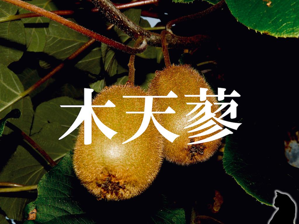 f:id:nao-yamamoto:20191207102425p:image
