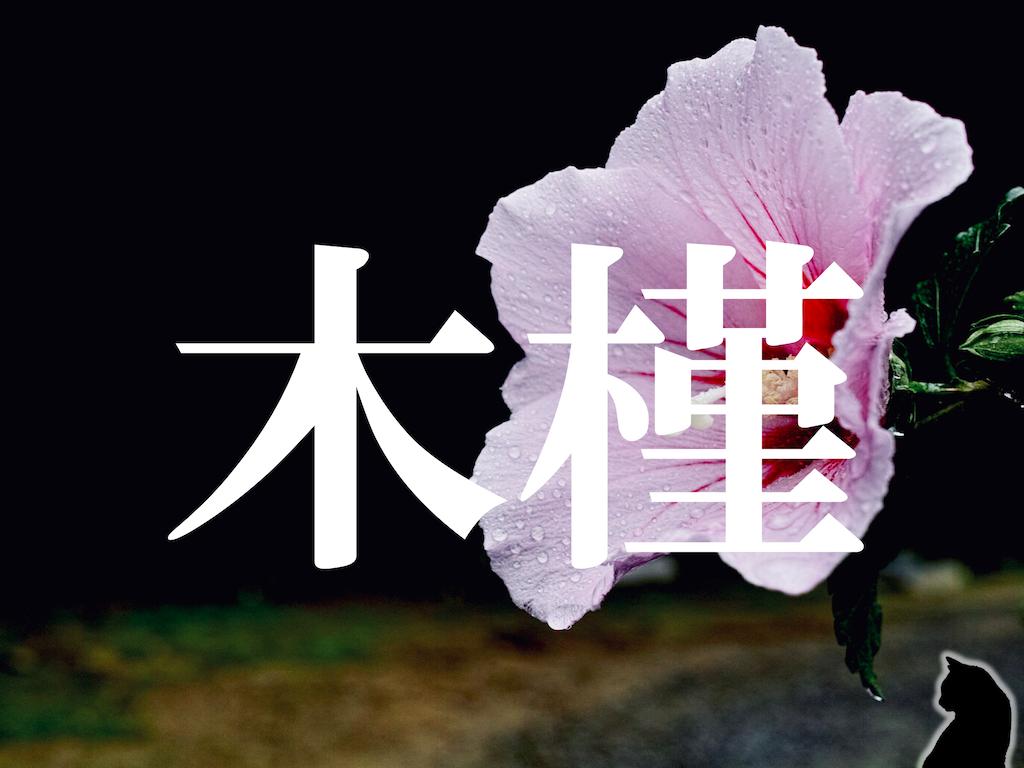 f:id:nao-yamamoto:20191207102643p:image