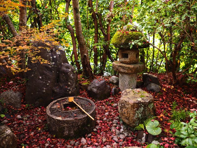 京都新聞写真コンテスト 絶妙なバランス