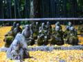 京都新聞写真コンテスト 黄色の絨毯に十六羅漢