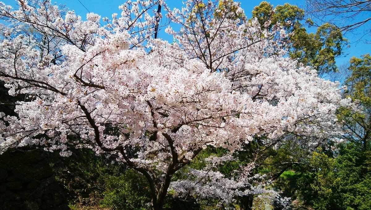 f:id:naoki-nishigaki:20190411001643j:plain