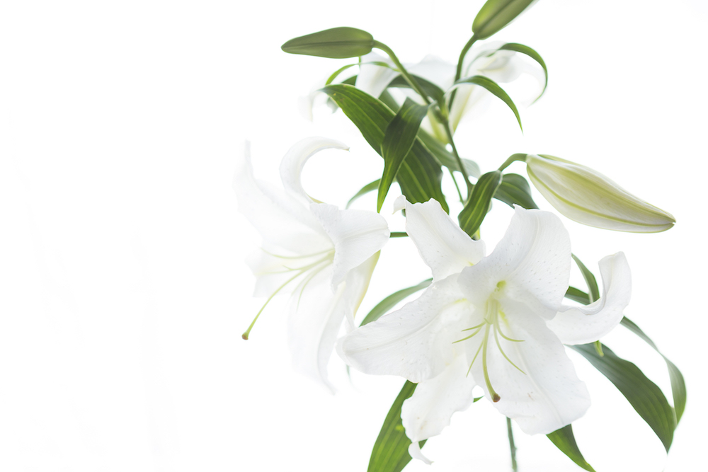 f:id:naoko-moriyama:20180901234119j:plain