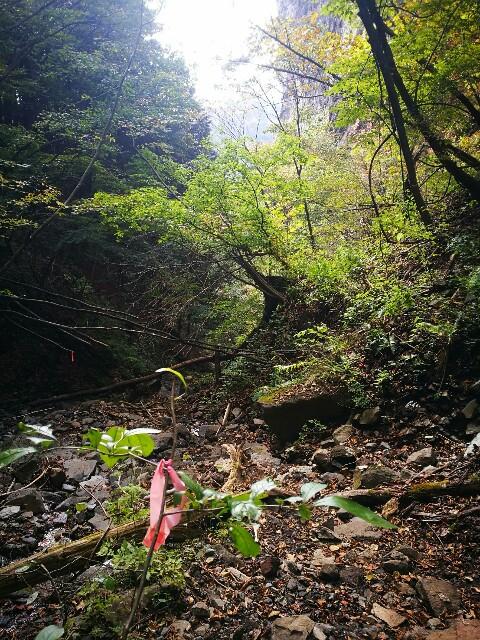 f:id:naoko-ushiki:20161030222002j:image