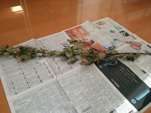 f:id:naoko-ushiki:20170125114514j:image