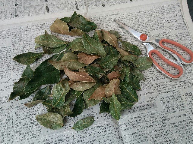 f:id:naoko-ushiki:20170125114526j:image