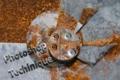 f:id:naoko83:20121105155107j:image:medium