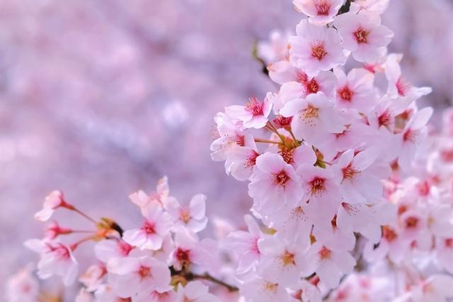 f:id:naomi_japan:20210415181057j:plain