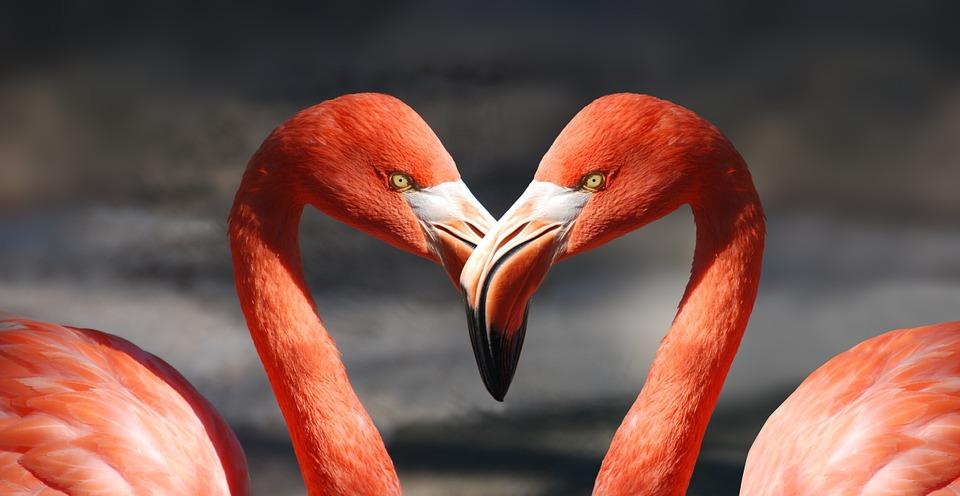 女性の恋愛観の進化と暗記言語の限界